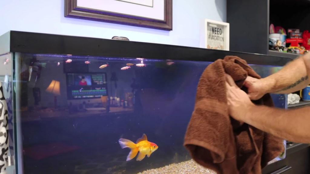 aquarium cleaning with towel